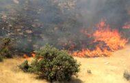 اطفای آتش سوزی منطقه جنگلی امیربکنده رشت