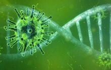 احتمال بومی شدن ویروس کرونا وجود دارد